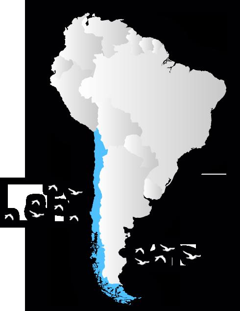 birdwatchingchile map